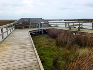 Saltmarsh Boardwalk