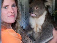 Wildlife carer with koala
